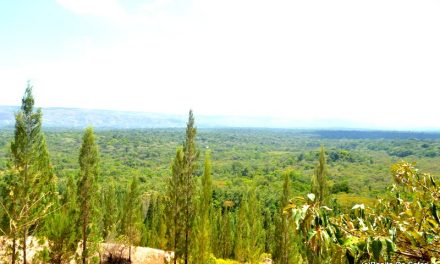 The tale of a date,Wanjala and Kakamega Forest.