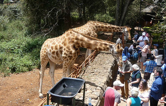 Top attractions in Nairobi